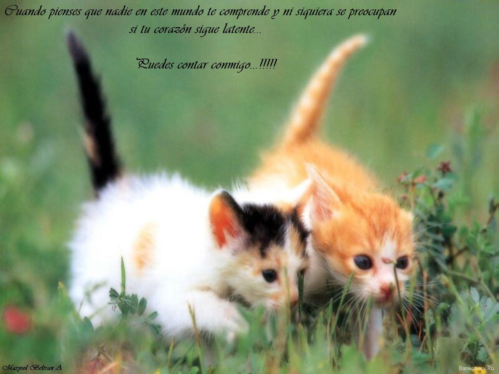 Fotos De Gatos Con Frases Wallpapers | Real Madrid Wallpapers