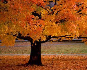 desktop-autumn-wallpaper-hd-2
