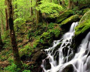 wallpaper-cascada-en-la-selva-con-musgos-y-liquenes-416037