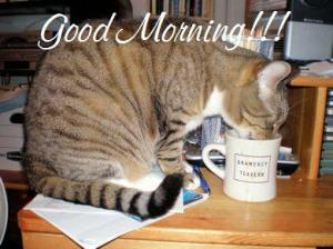 cat-drinking-coffee-1-wide