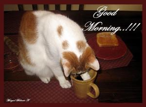 coffee_drinking_cat