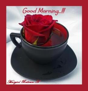 red-rose-in-black-tea-cup-michele-roohani1