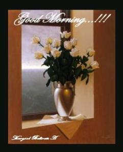 white_roses_blue_day