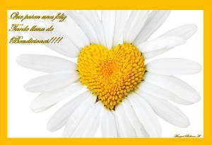 daisy-with-love-heart-middle-love