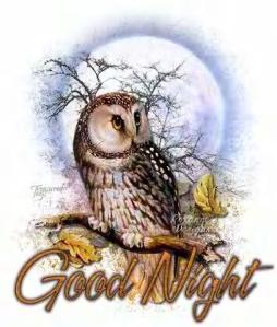 good_night_086