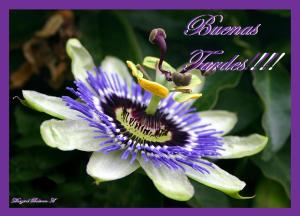 passion_flower_extract_for_treating_insomnia