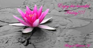 Pink-Lily-Flower-Wallpapers-1