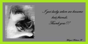 imagenes-abrazos-de-gatos2