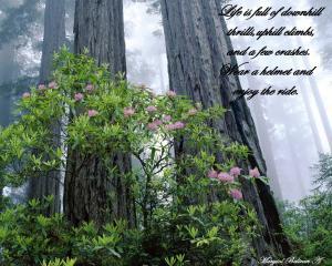 wallpaper-flores-creciendo-en-un-bosque-celestial-490908