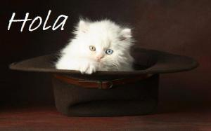6960-kitten-in-a-hat