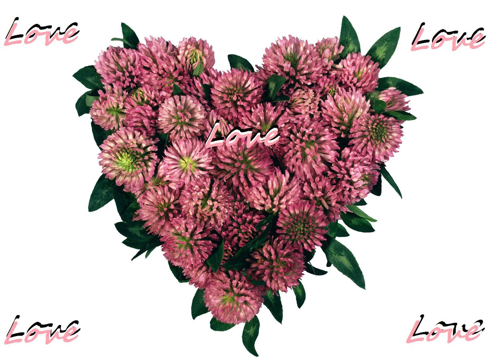 love heart shaped flowerflower - photo #33