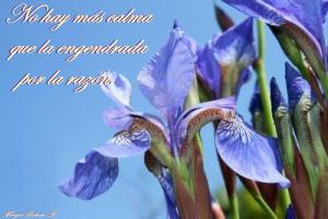 7098017-blue-iris-flowers-on-sky-background