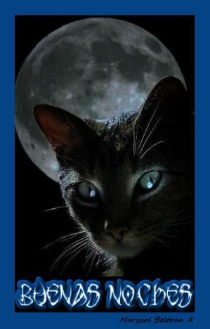 black-cat-moon
