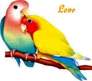 cute-love-box-blog-birds-loving-colorful-kissing-59010