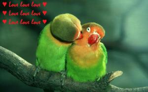 love_birds_hd_widescreen_wallpapers