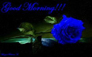 0-blue-rose