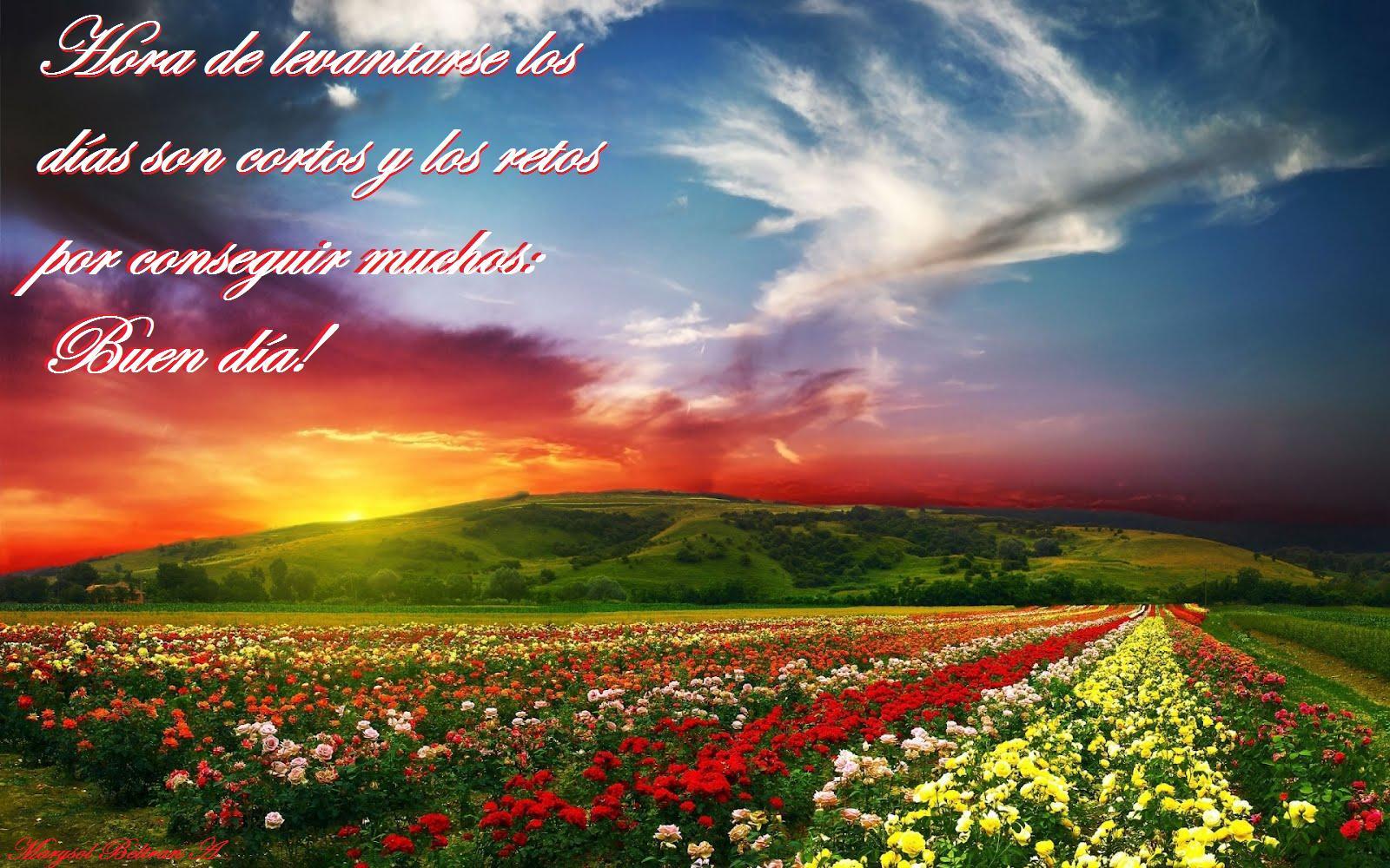 Buenos días,Tardes, Noche FEBRERO 2019 Lovely-nature-landscape-1920x1200-campo-de-flores-paisaje