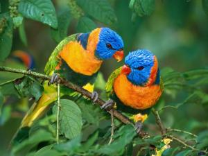 beautiful-colourfull-parrot-birds-desktop-wallpapers