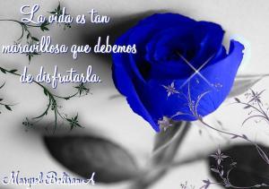 BLUE_ROSE_Wallpaper__yvt2