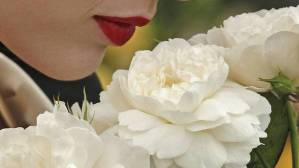 lips+and+roses