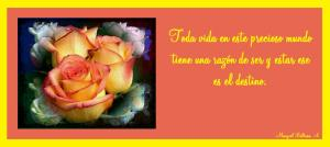 love_love-263496