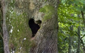 7-CATERS-Love-Hearts-In-Nature-09-jpg_004231