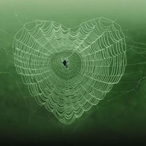 gn-dominique-piccinato-photography-love-creative-heart-photo-manipulation-spider-web-d0bfd0b0d183d182d0b8d0bdd0b0-d0bfd0b0d183d0ba-gens-pics-mmmmm-l