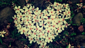 heart_shaped_flowers-1600x900