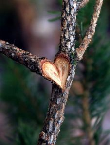Hearts-in-Nature-part2-1