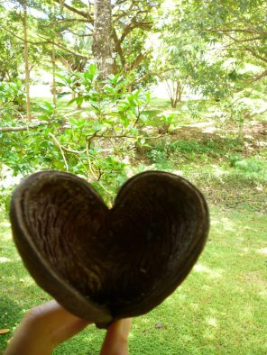 hearts_in_nature_by_frogs_in_the_rain-d5dl7lj
