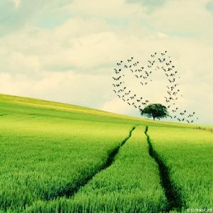 nature-heart17