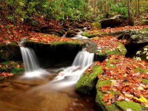 p_autumn-forest